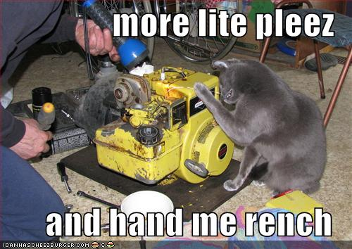 Funny-pictures-cat-helps-you-do-repairs
